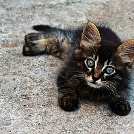 Little girl by Mirjana Cuturic Bocina - Animals - Cats Kittens ( cat, baby, young, animal )