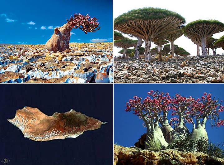 葉門 Socotra 島的生物