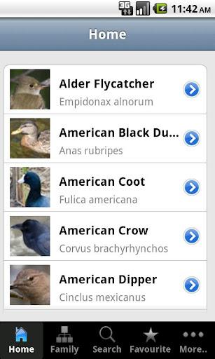 Backyard Birds of Canada