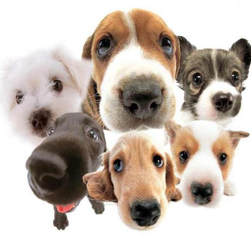 動物小工具 個人化 App LOGO-APP試玩
