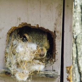 Cozy Home by Sarah Thomas - Animals Other