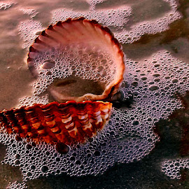 Sea shell by Ciprian Apetrei - Nature Up Close Other Natural Objects ( sand, sea shell, nature up close, brittany, beach )