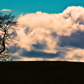 The Cow 'n Tree by Bob Dick - Landscapes Prairies, Meadows & Fields ( field, clouds, tree, landscape, animal )