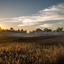 Ahhh... by Susan M - Novices Only Landscapes ( field, sunrise, misty, country,  )