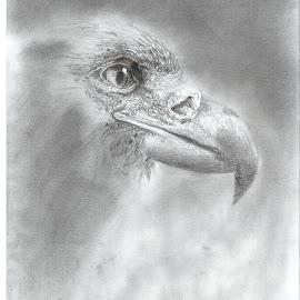Bird of Prey by Justin Rautenbach - Drawing All Drawing