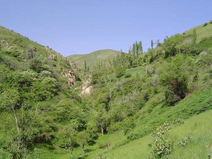 دره ای در شیزر