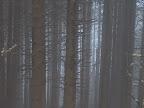 Padurea in ceata