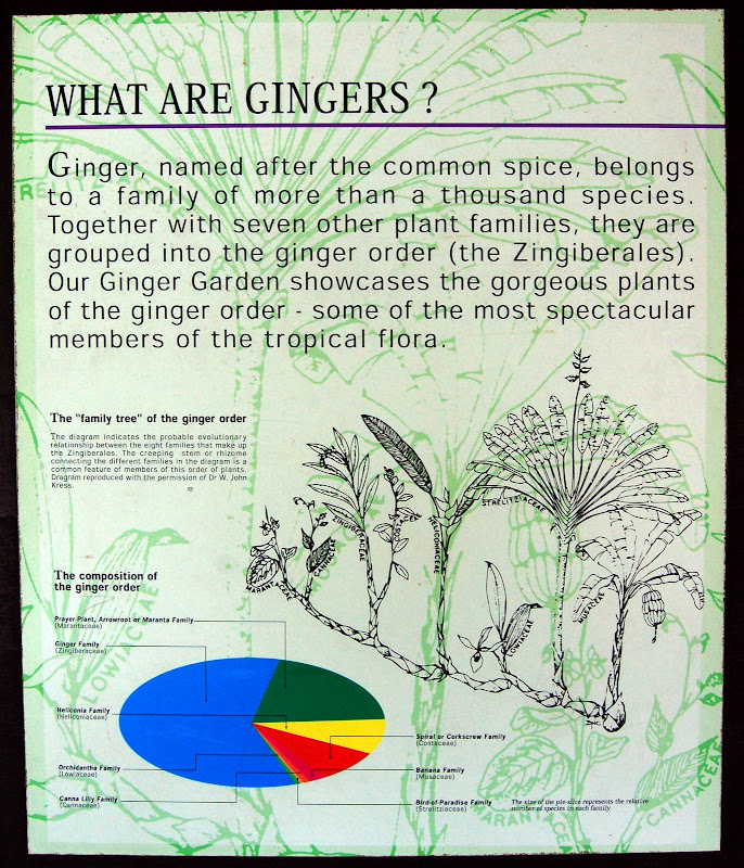 What are Gingers?