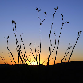 Sunset on the Apache Trail by Vince Mele - Landscapes Deserts ( sunset, silhouette, arizona, apache trail, ocatillo, creativity, lighting, art, artistic, purple, mood factory, lights, color, fun )