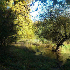 Autumn sunshine by Wendy Davey - Novices Only Landscapes ( #trees #autumn )