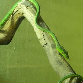 by Bhavin Malavia - Animals Reptiles