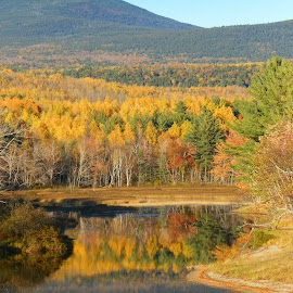 Fall mountain foliage by Sandy Davis DePina - Landscapes Mountains & Hills ( fall leaves mountain water pond )