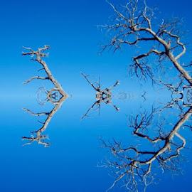 Mirror Image by Bong Perez - Nature Up Close Trees & Bushes
