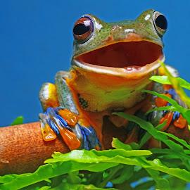 say hello.. by Jeffrey Haryanto - Animals Amphibians