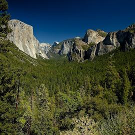 Yosemite Valley by John Slot - Landscapes Forests ( half dome, yosemite valley, yosemite, el capitan, cathedral,  )
