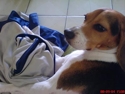 [Dog]紅豆喜歡我的球褲!