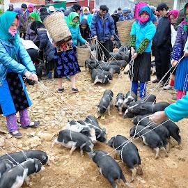 Highland fair by Linh Phan - People Group/Corporate ( highland, dongvan, piggy, fair, hmong )