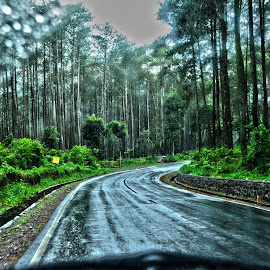 Pinus by Dedi Gunawan - Landscapes Forests