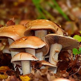 by Irena Perkušić - Nature Up Close Mushrooms & Fungi