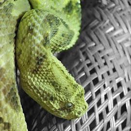 Selective by JO Azzopardi - Animals Reptiles