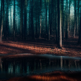 The poetry of the earth never ends. by Victor Hugo - Nature Up Close Trees & Bushes ( water, nature, tree, grass, mood, trees, moody, forest, puddle )