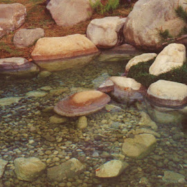 Water Garden SATX SLR scan 1-29-15 (41) by Jim Suter - Nature Up Close Water