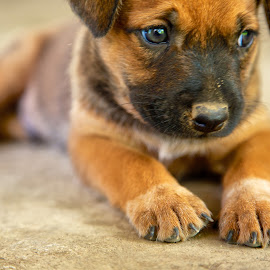 Motsa by Ben Mar - Animals - Dogs Puppies
