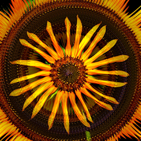 Daisy Wheel by Tina Dare - Digital Art Abstract ( abstract, patterns, designs, sunflower, daisy, yellow, flower, shapes )