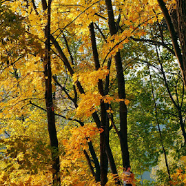 Autumn. Moscow. by Vlad Sidorak - City,  Street & Park  City Parks ( park, fall colors, fall, color, colorful, nature )