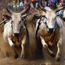 Twin.. by Hendra Nasri - Sports & Fitness Rodeo/Bull Riding