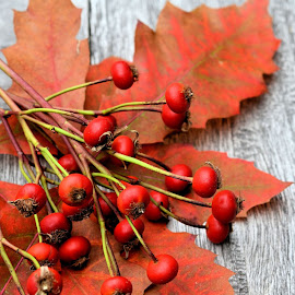 Autumn's wealth by Heather Aplin - Artistic Objects Still Life ( red, autumn, oak, fall, leaf, leaves, berries, color, colorful, nature )