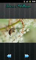 Screenshot of Galaxy S3 Wallpapers HD