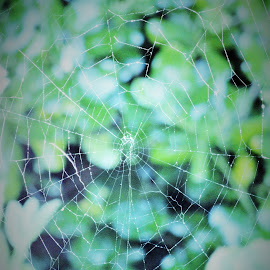 The Web in the Garden by Marion Metz - Nature Up Close Webs ( cobweb, nature, art, spider, web, garden, new zealand )