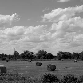 Sunday Harvest by Diane Ebert - Landscapes Prairies, Meadows & Fields ( #memories, #farming, #bringinginthesheeves, black and white, b&w, landscape )