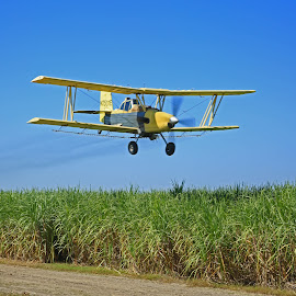 Spraying Sugar Cane by Ron Olivier - Transportation Airplanes ( spraying sugar cane )
