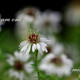 You are the one.. by Dipali S - Typography Quotes & Sentences ( wild flower, ecard, greeting, fonts, typography )