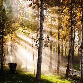 The sun paws by Behrad Nourieh - Landscapes Forests
