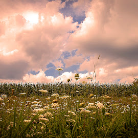 Field of Dreams by Nancy Senchak - Landscapes Prairies, Meadows & Fields