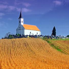 Corn and church by Tihomir Beller - Landscapes Prairies, Meadows & Fields ( field, meddows, village, chrch, corn )