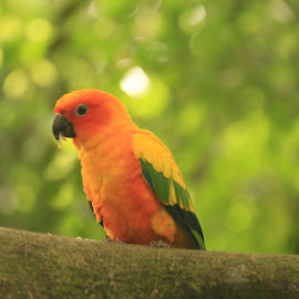 Nice Parrot by Michael Loi - Novices Only Wildlife ( parrot, sg, bird park )