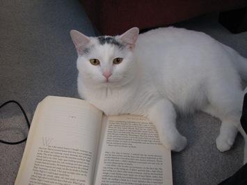 kitty 193