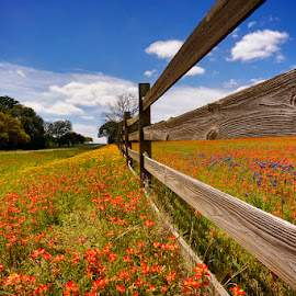 TEXAS WILDFLOWERS 2014 by DJ HOGG - Landscapes Prairies, Meadows & Fields ( wildflowers, color, canon 5d mark 3, 14mm lens, landscape, digital )