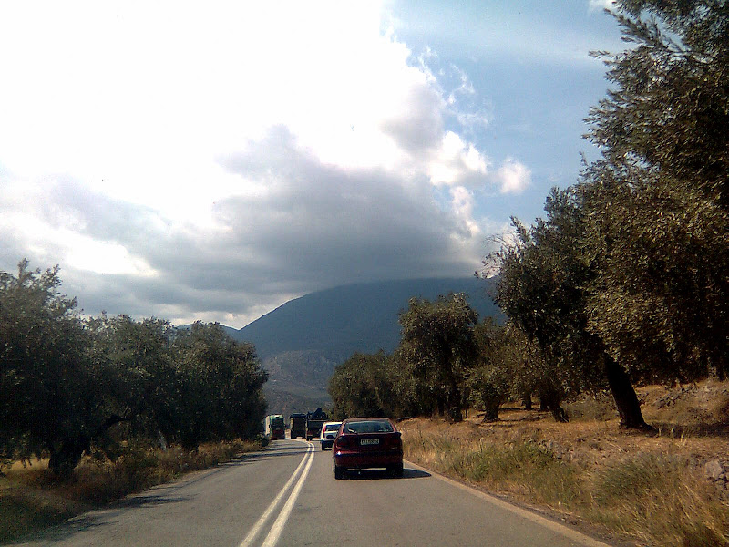 driving through olive trees