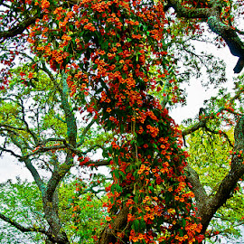 Oak tree with a trumpet vine by David Winchester - Nature Up Close Trees & Bushes