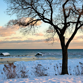 Winter Beauty by Natalia Shields - Landscapes Weather ( water, winter, tree, sunnyside, silhouette, sunset, toronto, snow, lake )