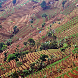 Agriculture land terracing2 by Sigit Purnomo - Landscapes Prairies, Meadows & Fields