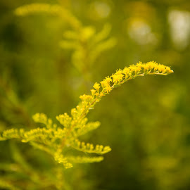 The Yellow Leave by Desai Photography - Nature Up Close Leaves & Grasses ( leave, yellow )
