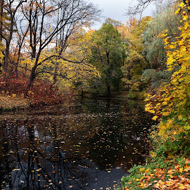 Elagin fairytales by Maxim Malevich - City,  Street & Park  City Parks ( season, park, autumn, fall, trees, yellow, leaves, landscape, pond, color, colorful, nature )