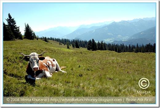 Austria_RossbrandCow framed