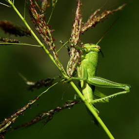 lunch by Djamal Sharief - Animals Insects & Spiders ( wildlife )